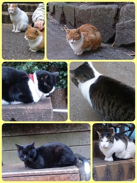 公園の猫たち