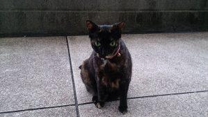 ホウトン駅の猫