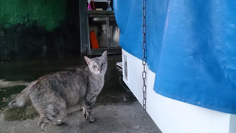 なつっこい猫