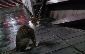 猫村から帰る時
