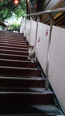 階段のにゃんこ