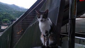 可愛い台湾の猫