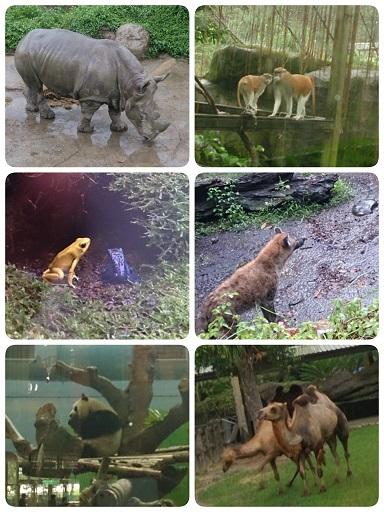 台湾動物園