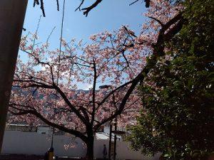 ©2019 スーの徒然日記 桜